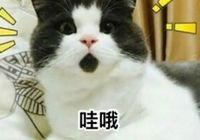 官方公布!漢川人口普查數據出爐 常住人口有多少?