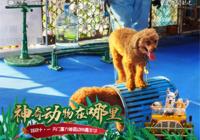 這個打卡地火了!天門富力首屆動物嘉年華引爆黃金周