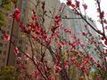 锦绣江山园林