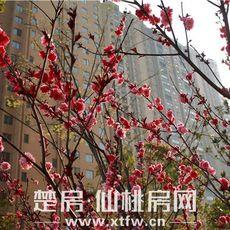 锦绣江山小区实景图