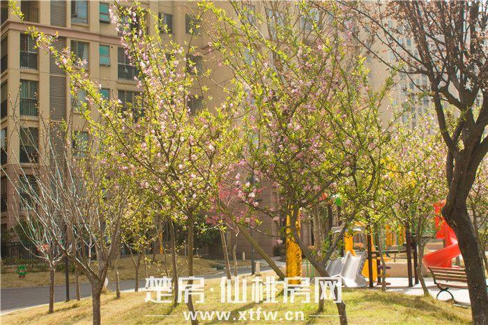 20190325-南國明珠小區景色1.JPG